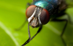 Flying Insects Wallpaper