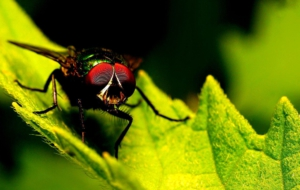 Flying Insects For Desktop