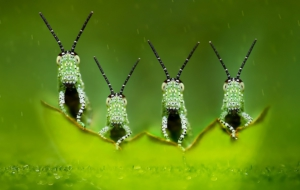 Insect High Definition Wallpapers