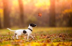 Jack Russell Terrie High Quality Wallpapers