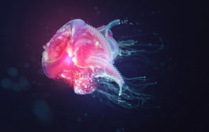 Jellyfish High Definition Wallpapers