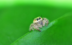 Jumping Spider High Definition Wallpapers