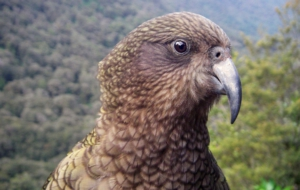 Kea High Definition