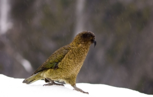 Kea For Desktop