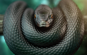 Pictures Of Black Mamba