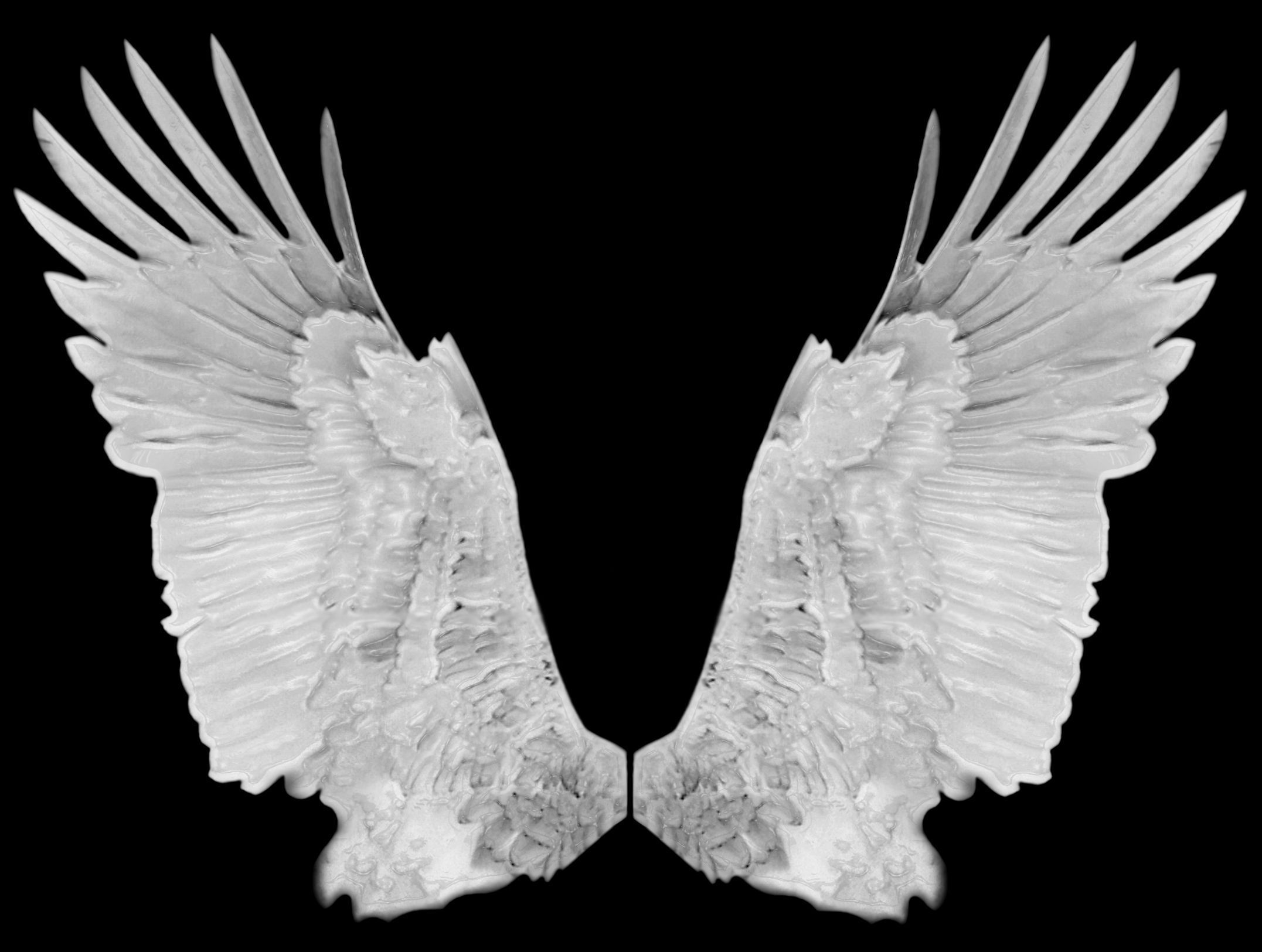 Angel Wings Photos