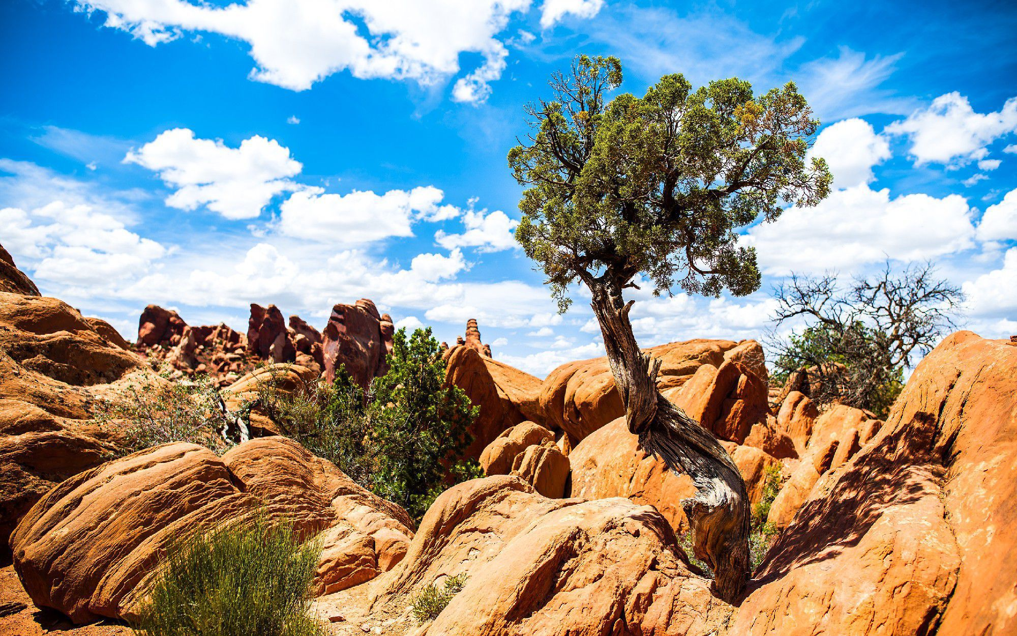 Arches National Park In High Resolution