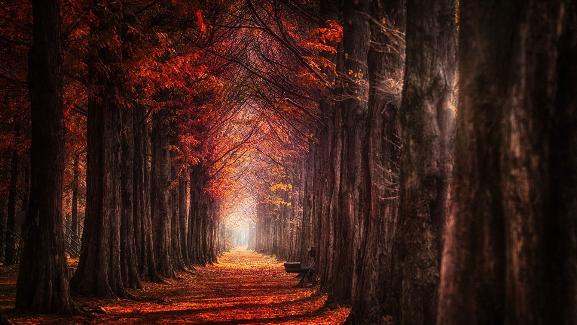 Autumn Forest HD
