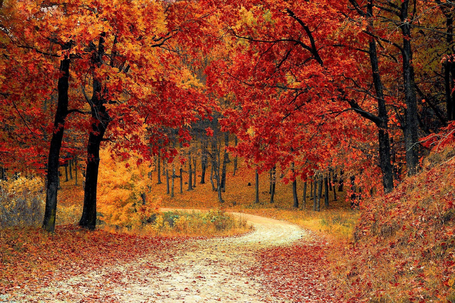 Autumn Forest High Definition Wallpapers