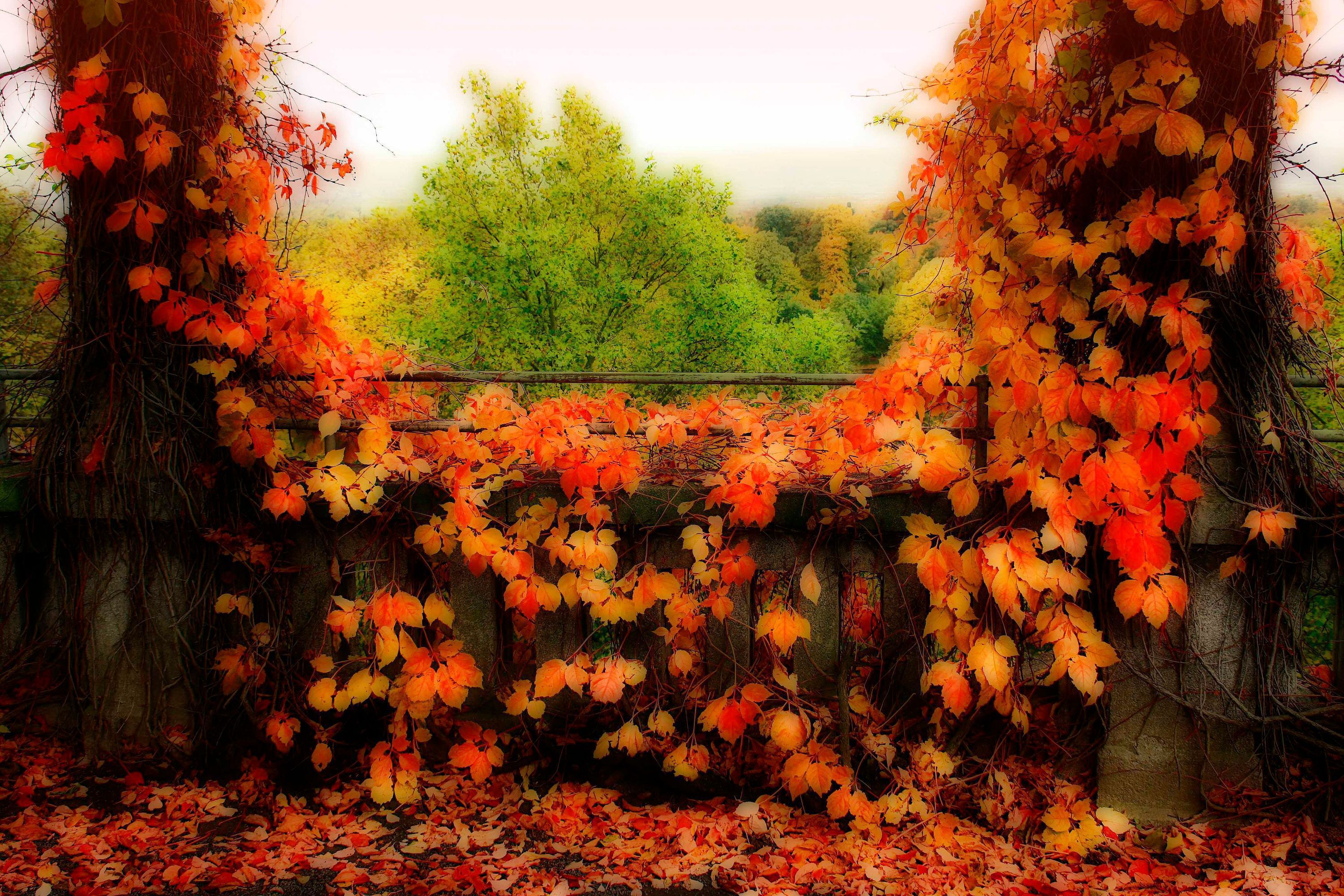 Autumn Leaves HD Background