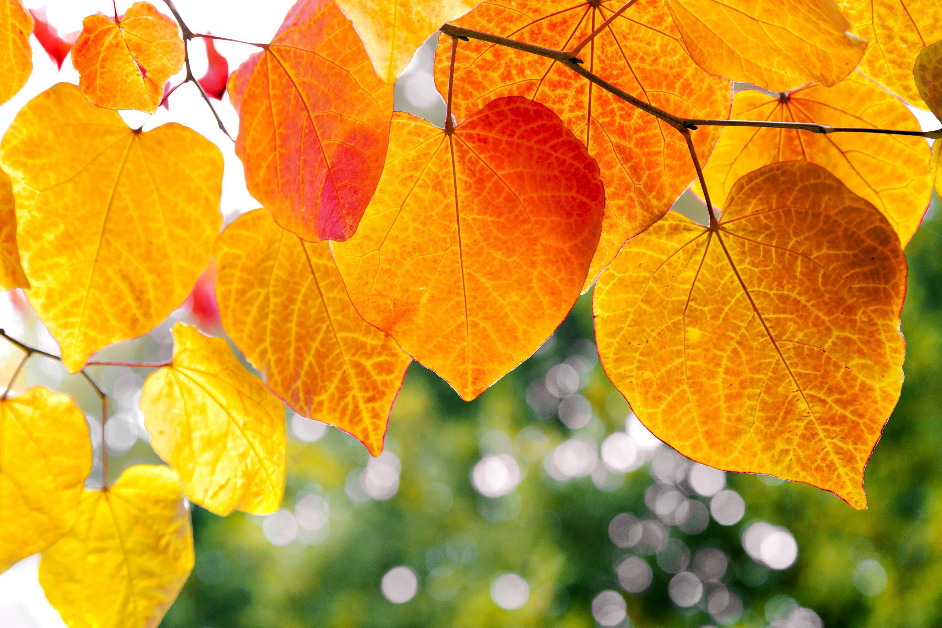 Autumn Leaves High Definition Wallpapers