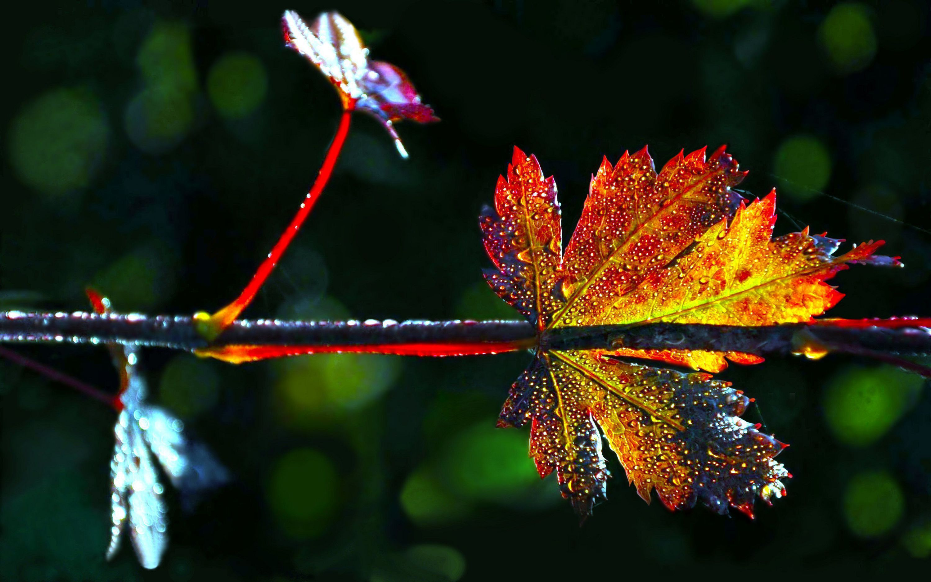 Autumn Leaves In High Resolution