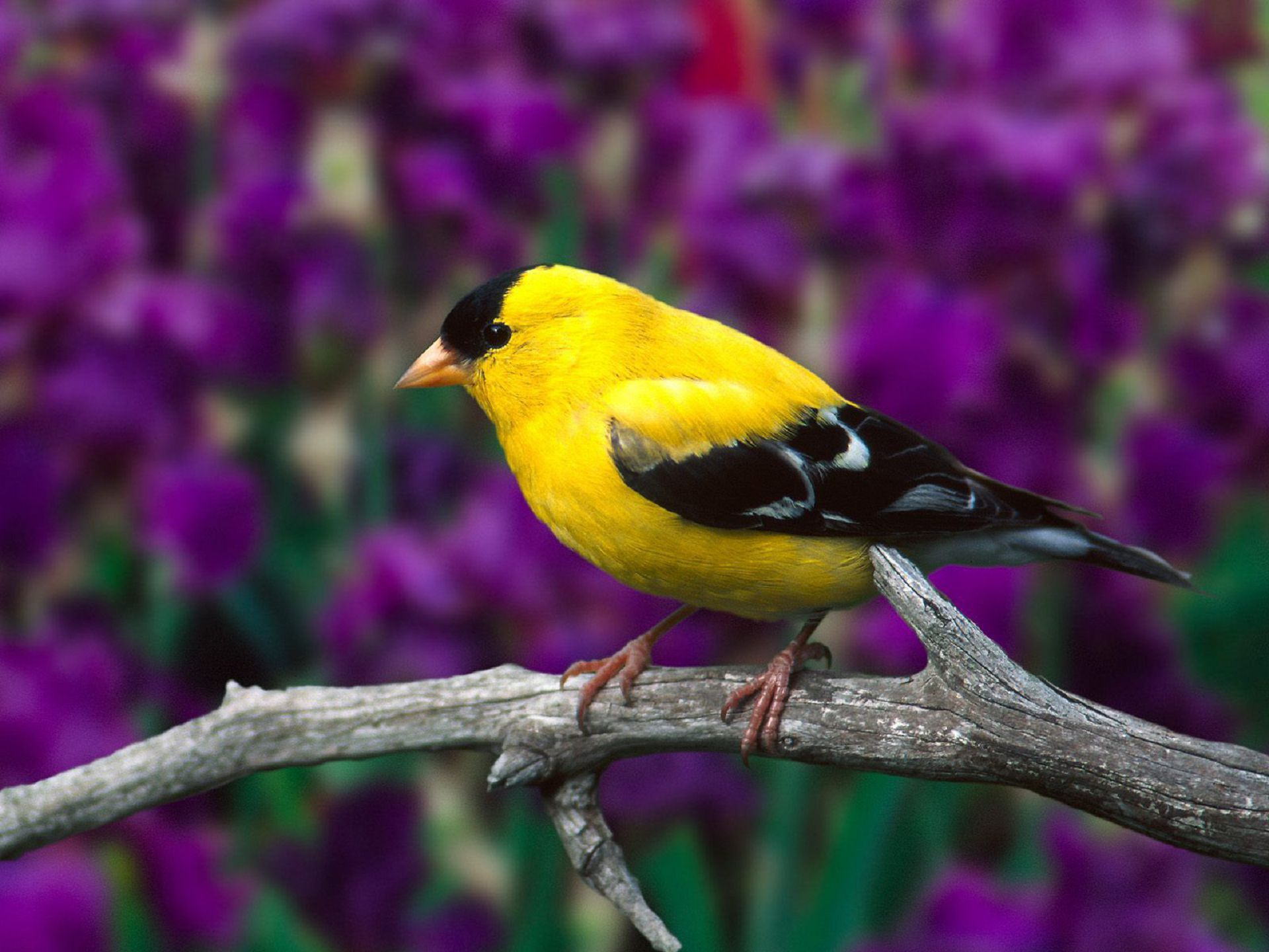 Aves Exoticas Gallery