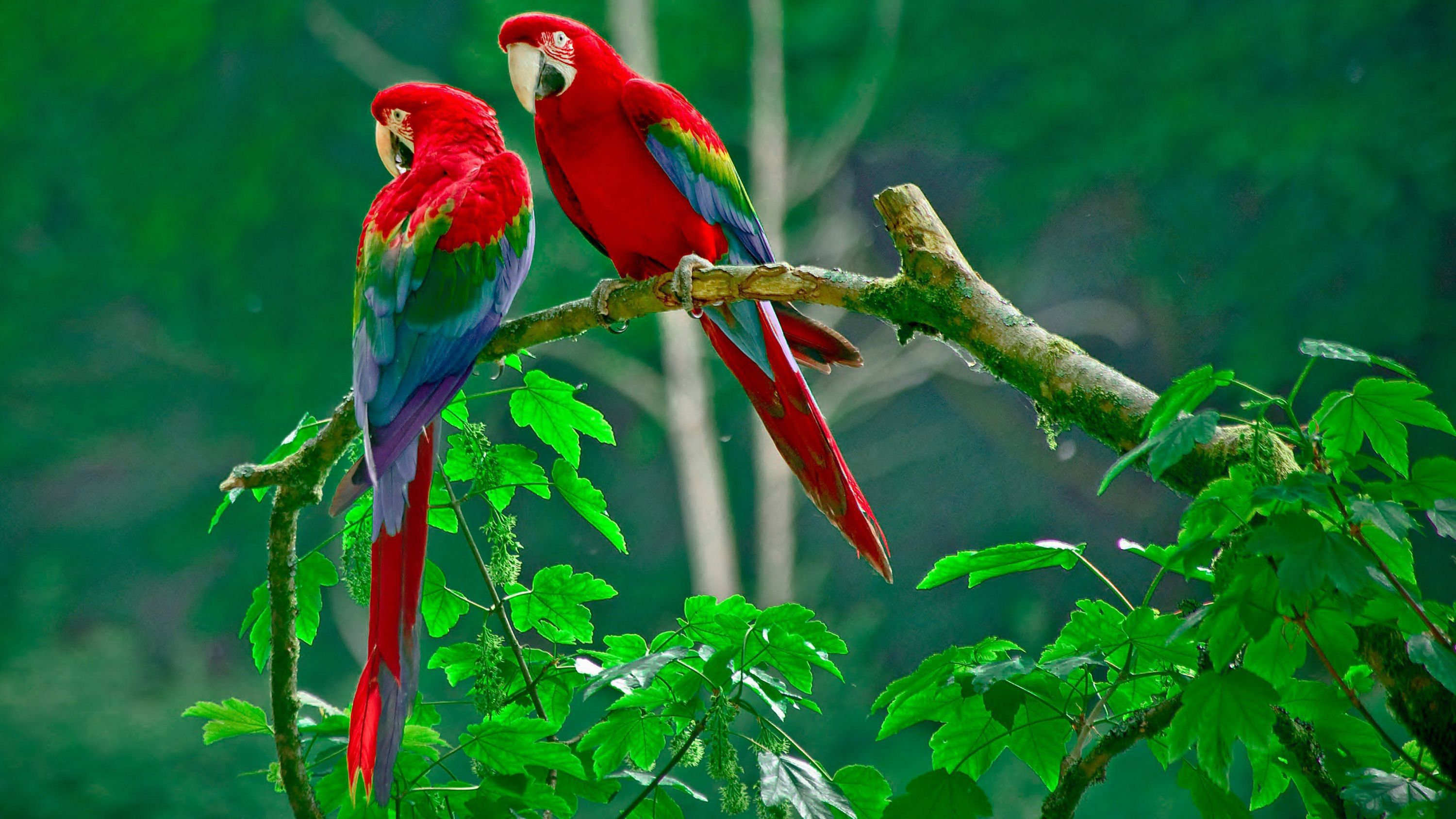 Aves Exoticas HD Background