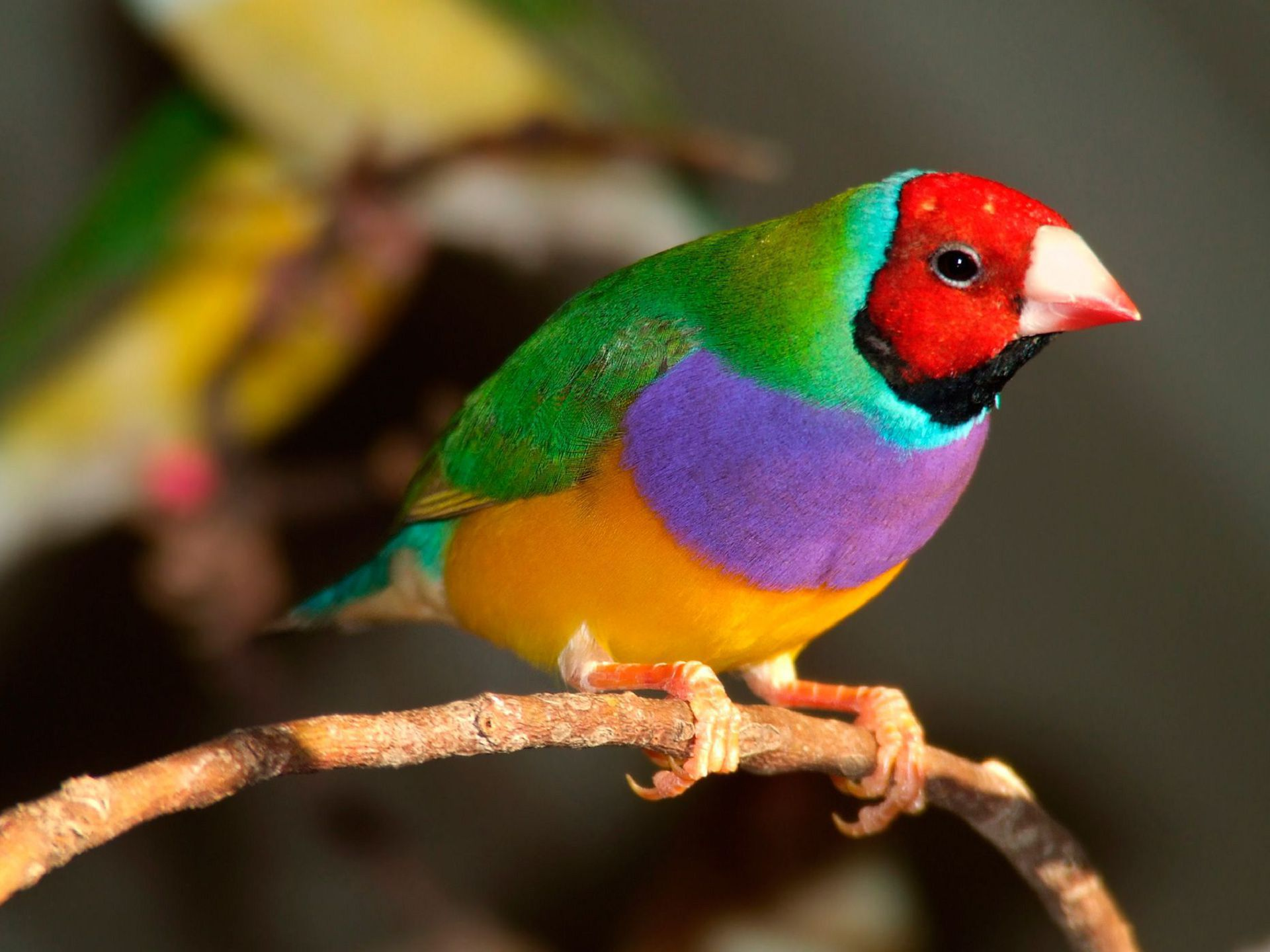 Aves Exoticas High Definition Wallpapers