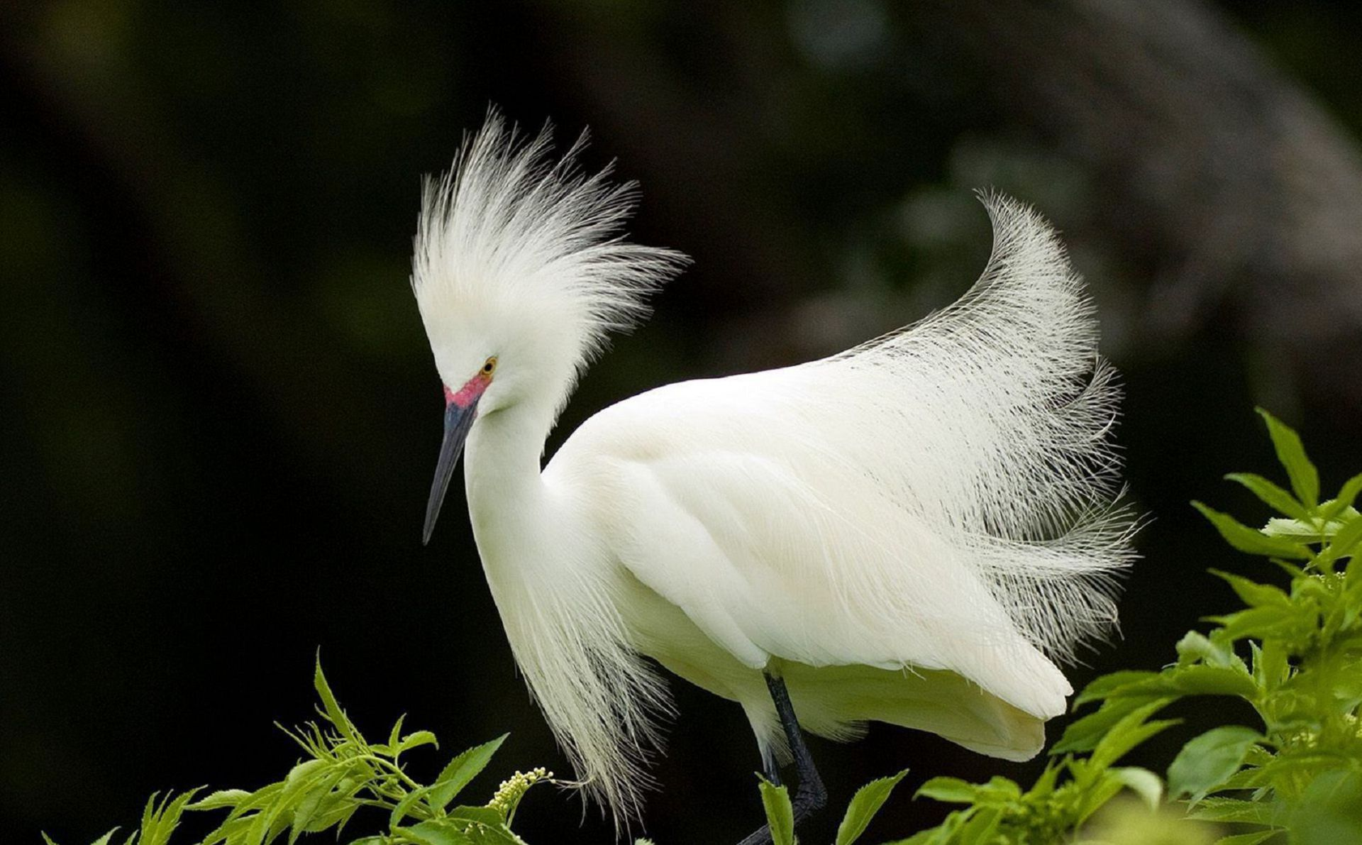 Aves Exoticas Wallpapers HD