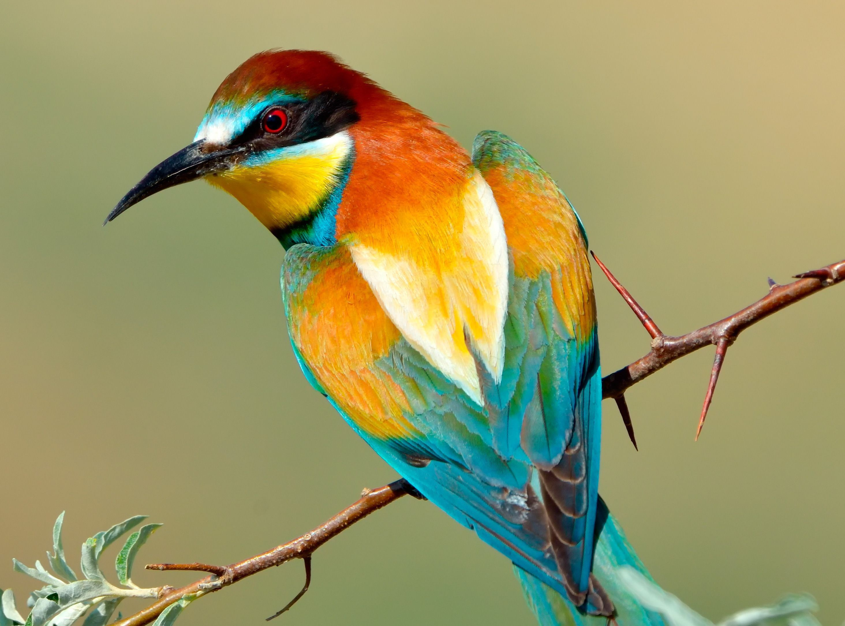 Aves Exoticas Wallpaper Pack