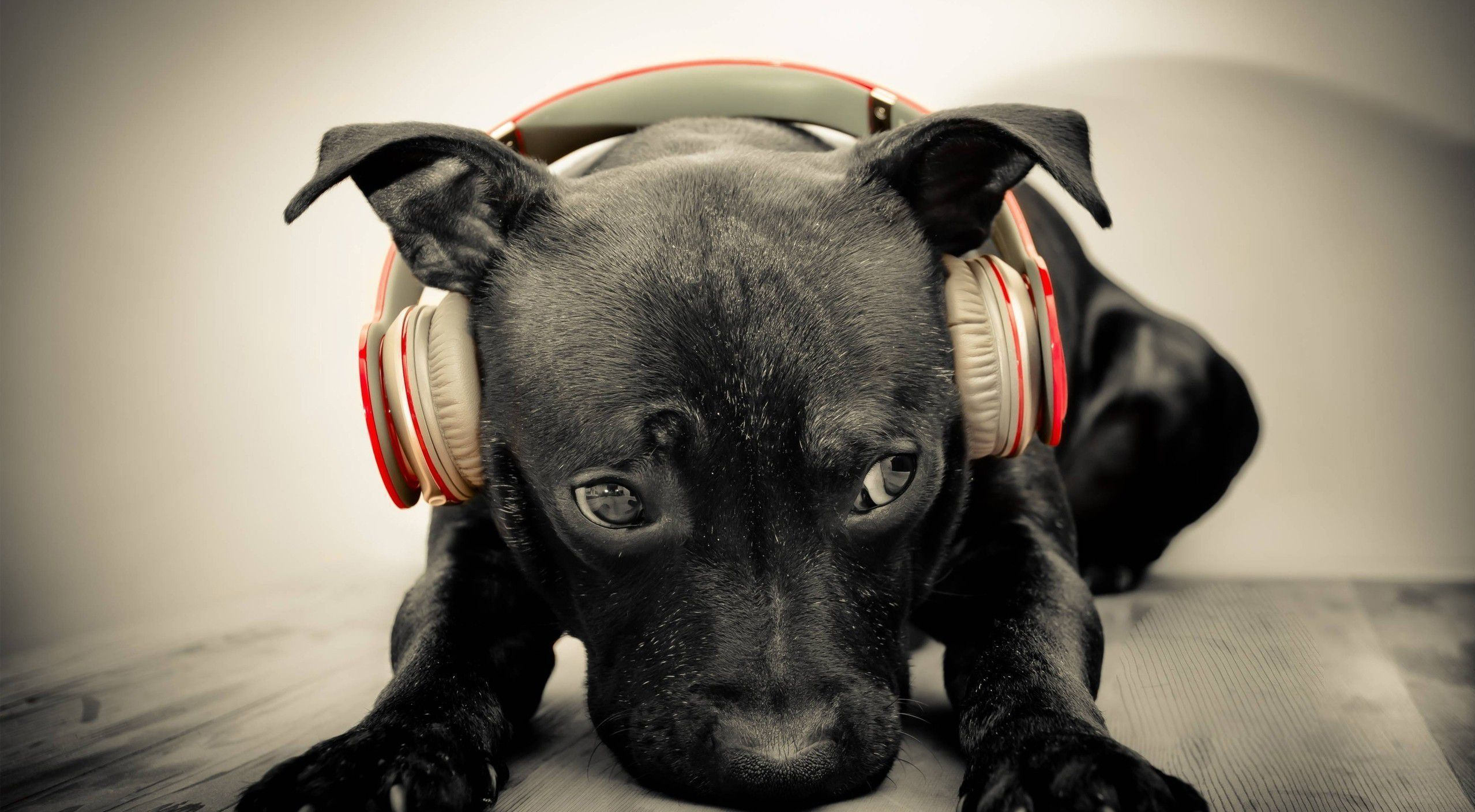 Beats By Dre Background