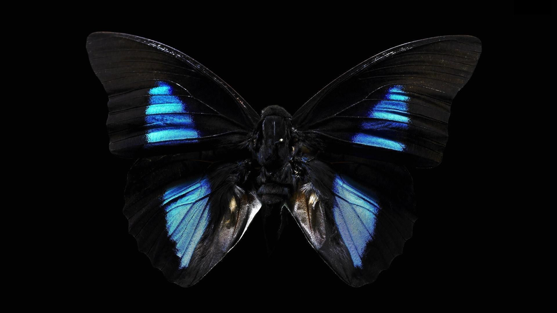 Black Butterfly Background