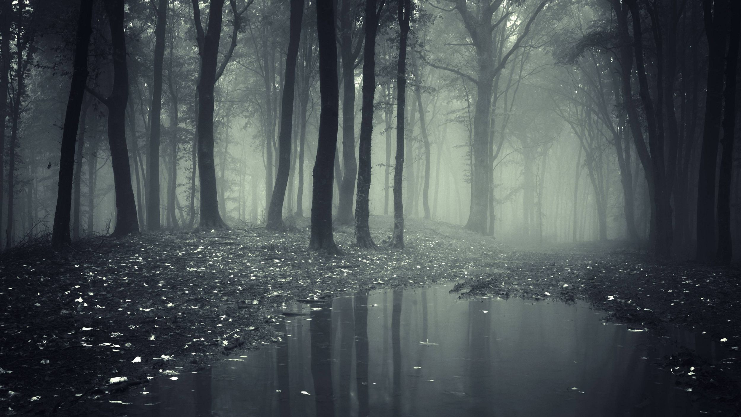 Black Forest High Definition Wallpapers