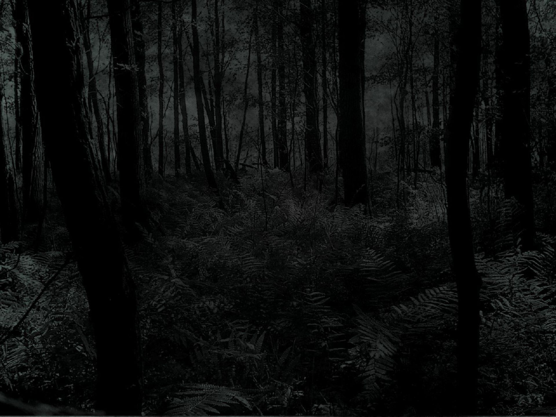Black Forest High Quality Wallpapers