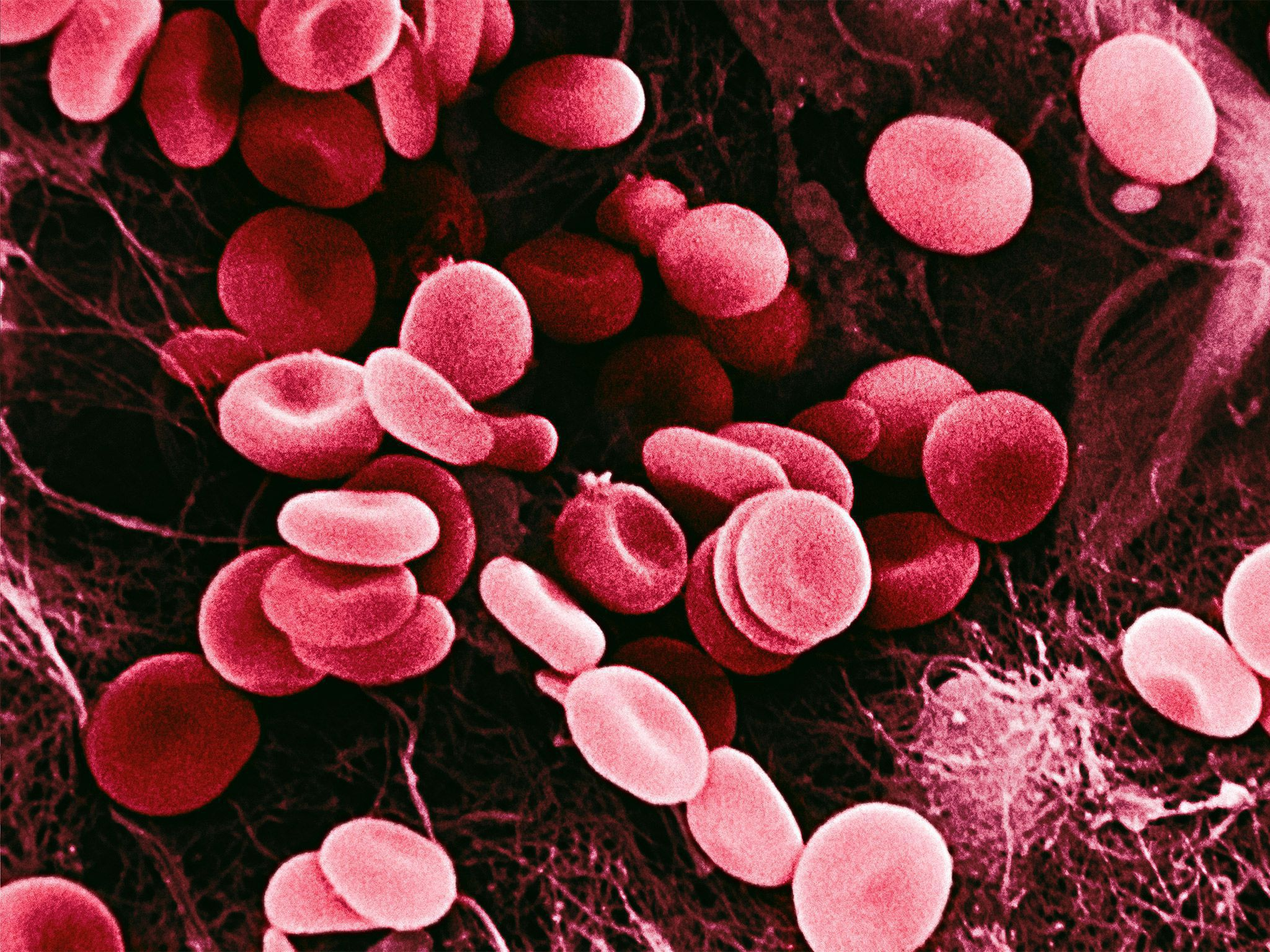Blood Cells HD Wallpaper