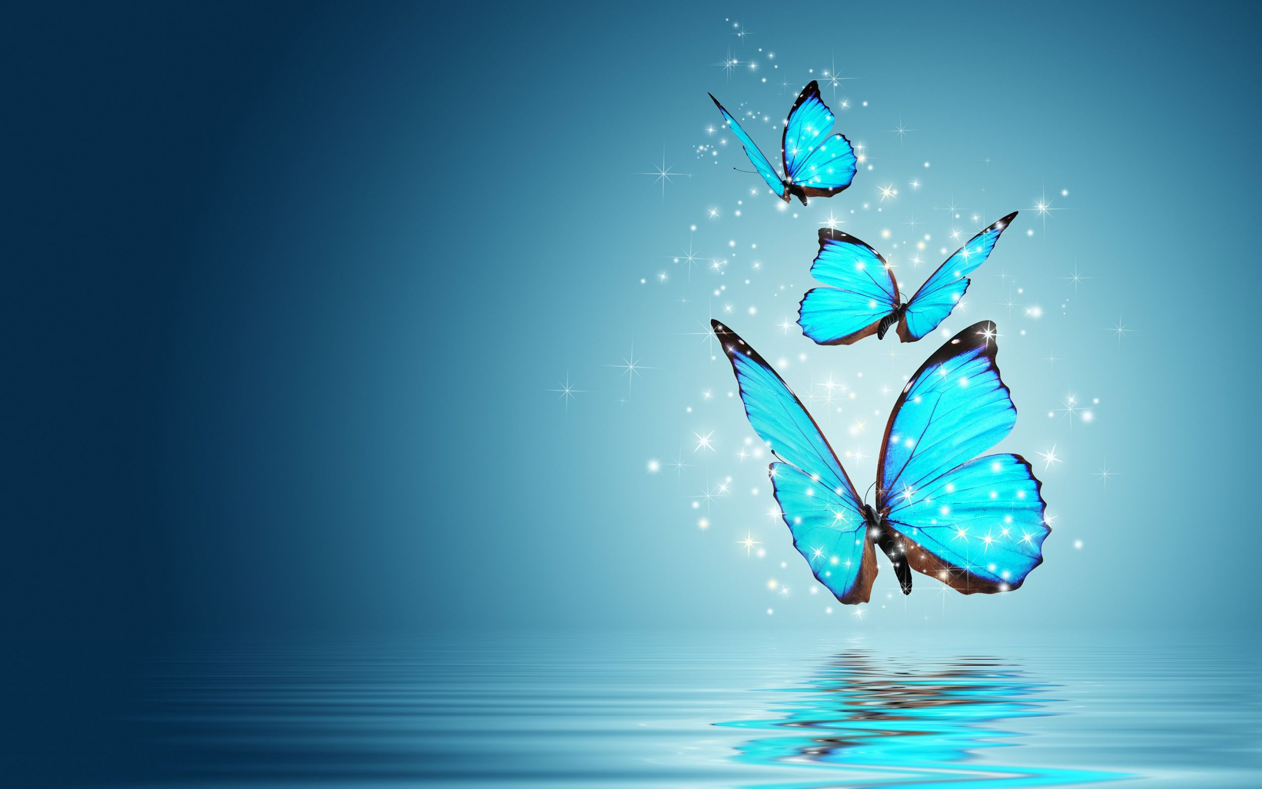 Blue Butterfly High Quality Wallpapers