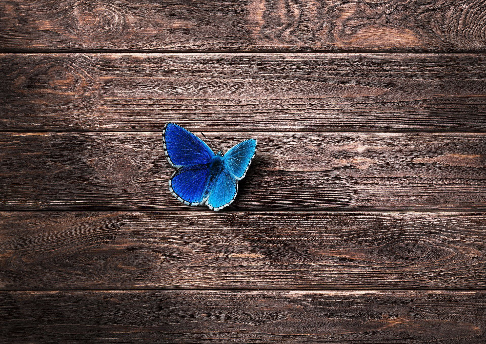 Blue Butterfly Images