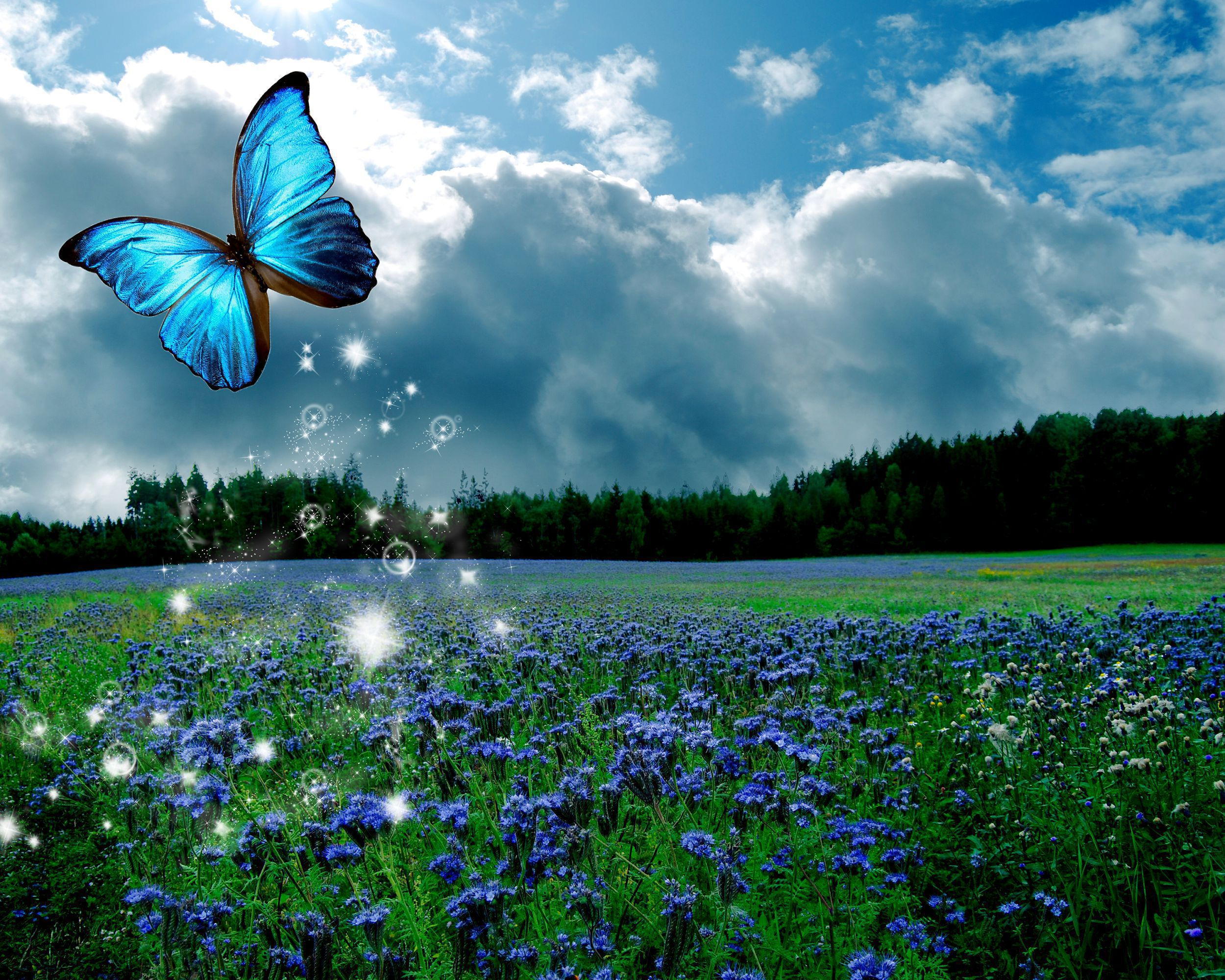 Blue Butterfly In High Resolution