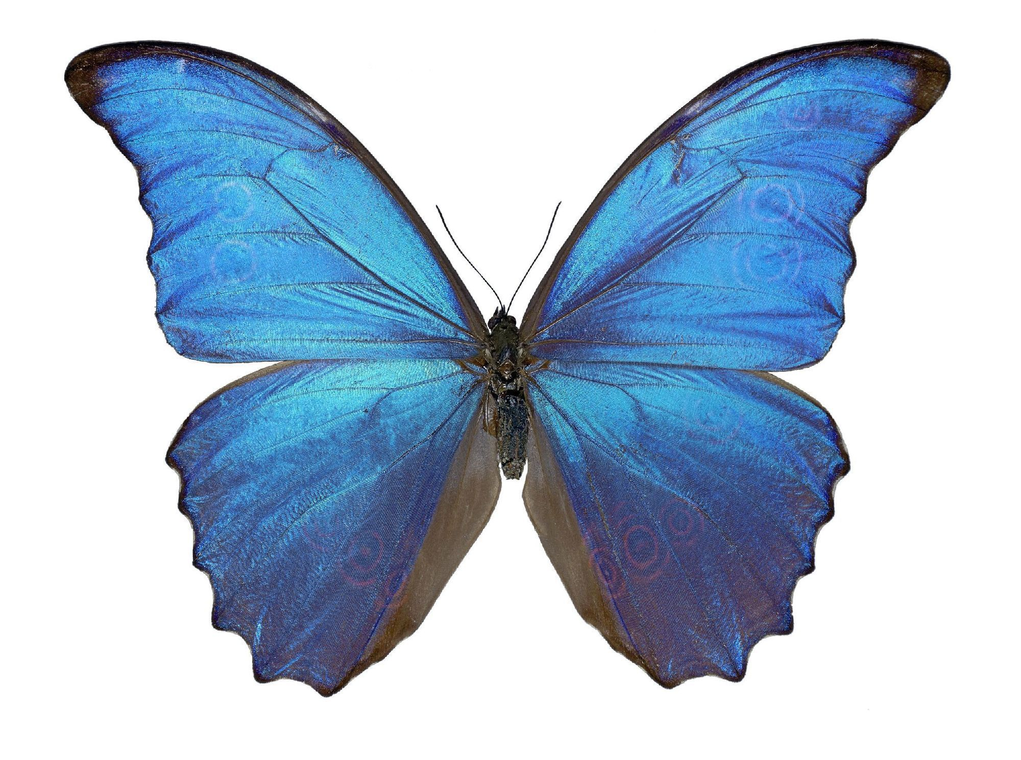 Blue Butterfly Tumblr