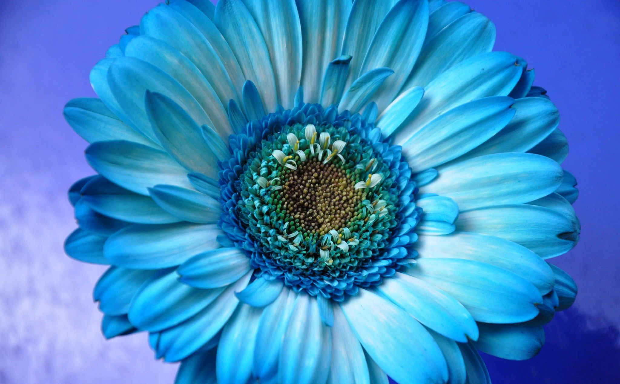 Blue Flowers Pictures