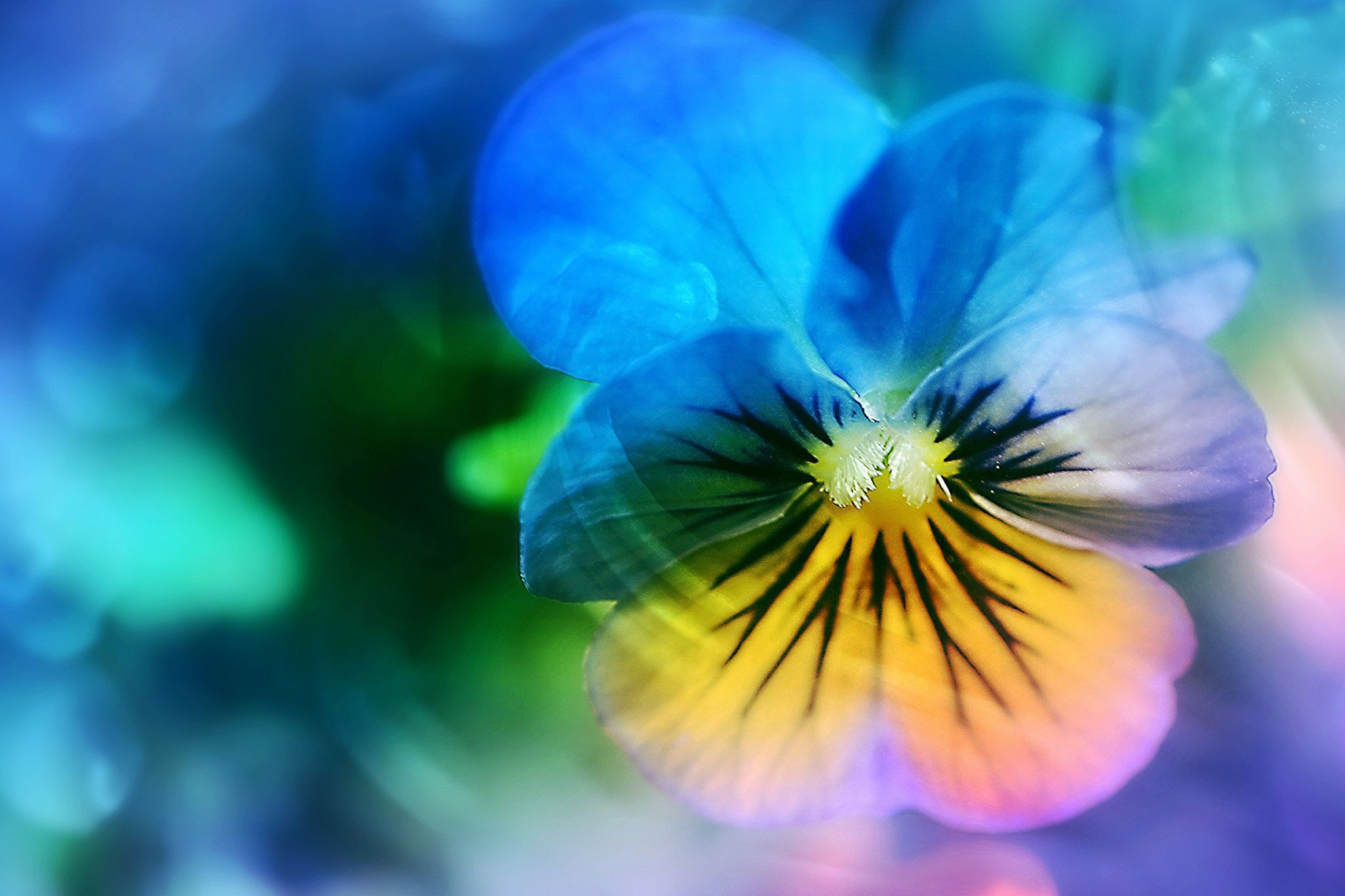 Blue Flowers Wallpapers HQ