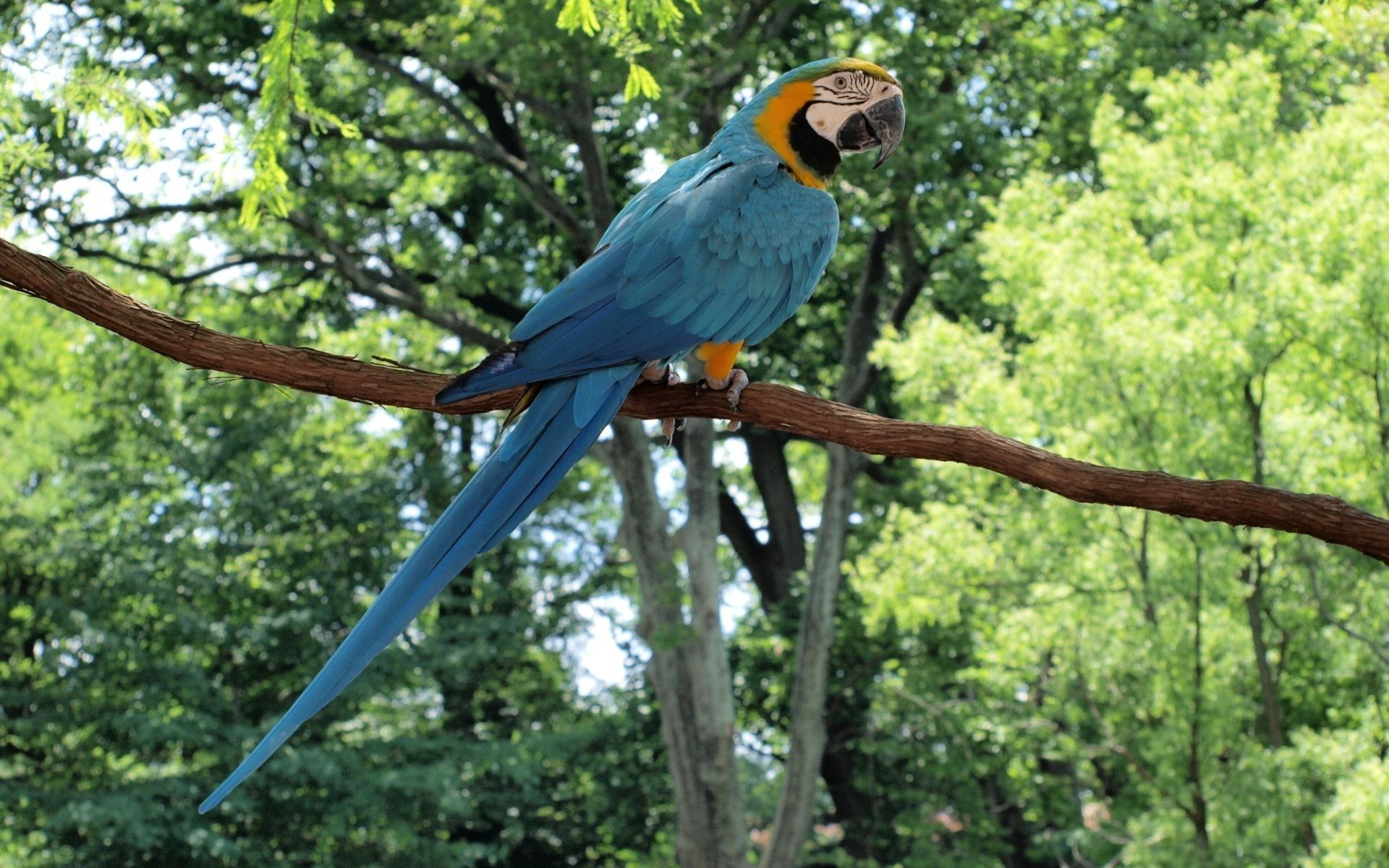 Blue Parrot Wallpapers HD