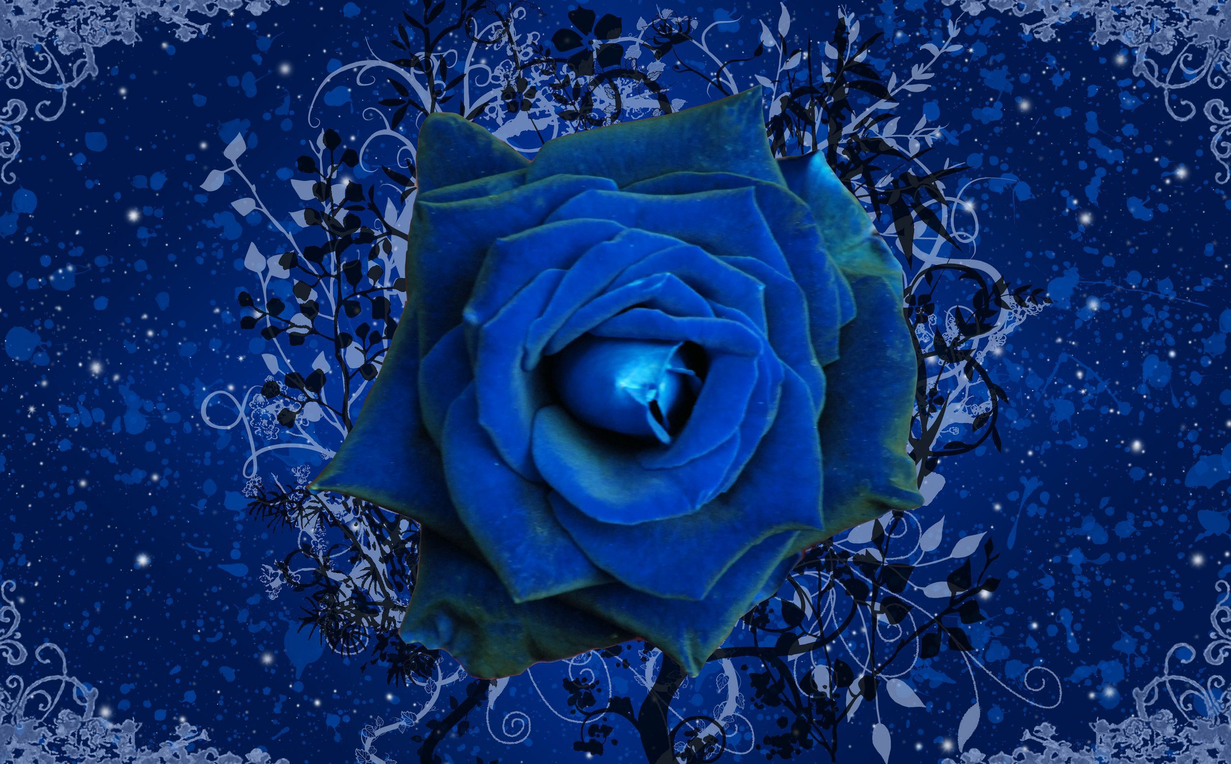 Blue Roses Pictures