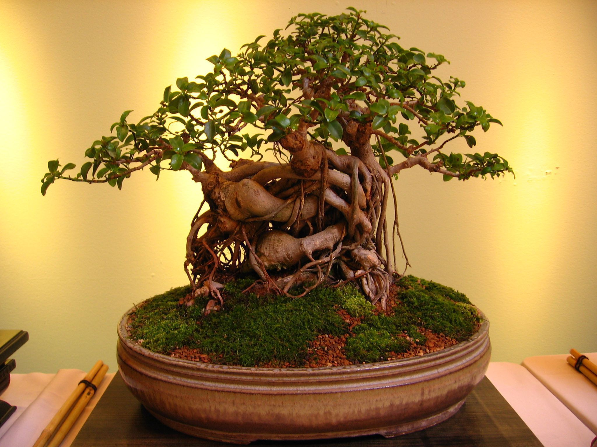 10 Things To Avoid When Growing Bonsai Trees