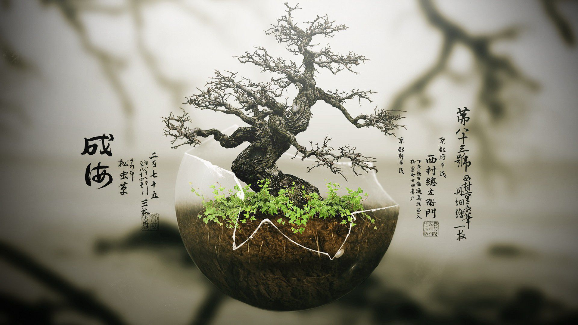 Bonsai Tumblr