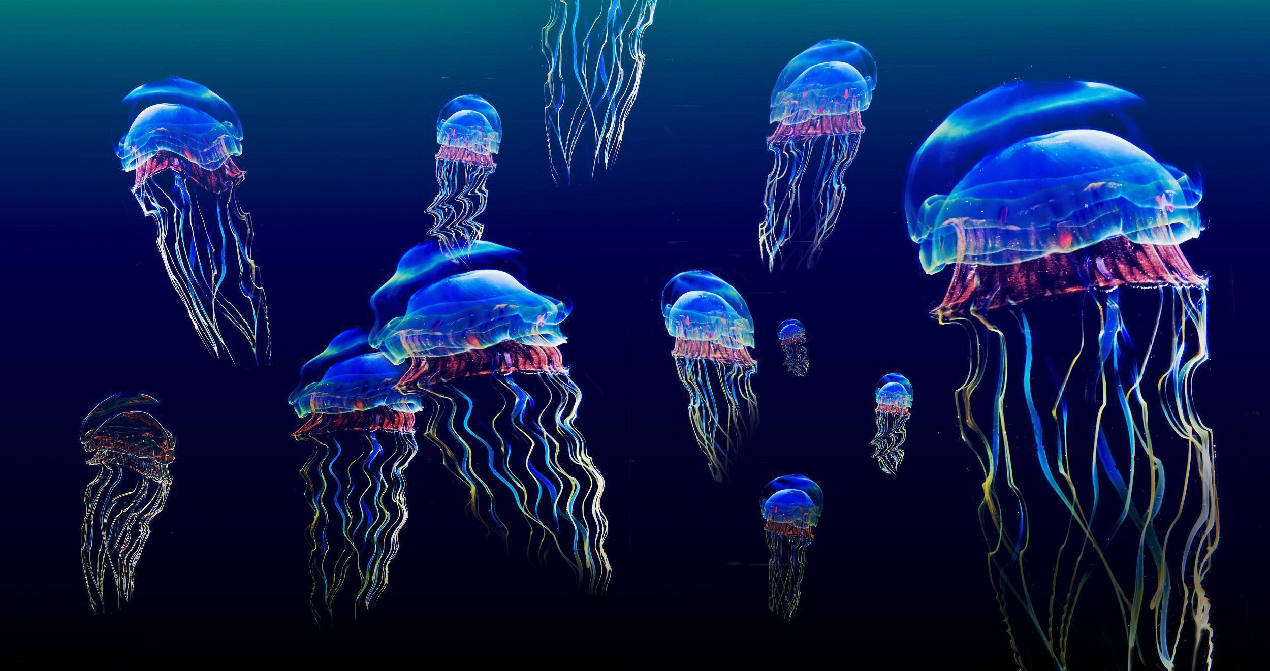 Box Jellyfish Desktop