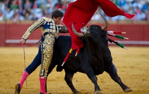 Bull Fighting Beautiful