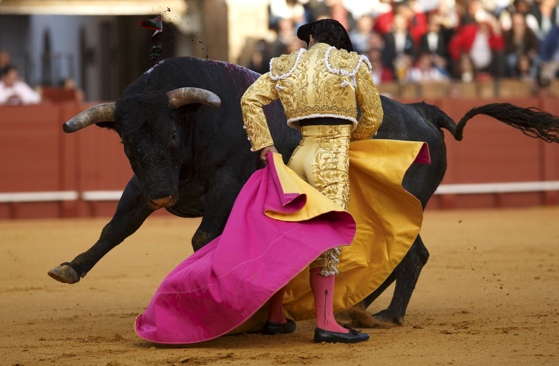 Bull Fighting Images