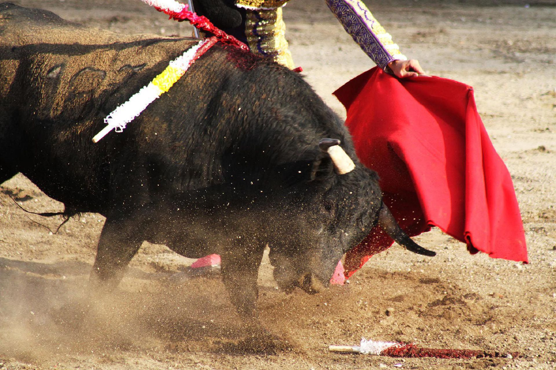 Bull Fighting Pictures