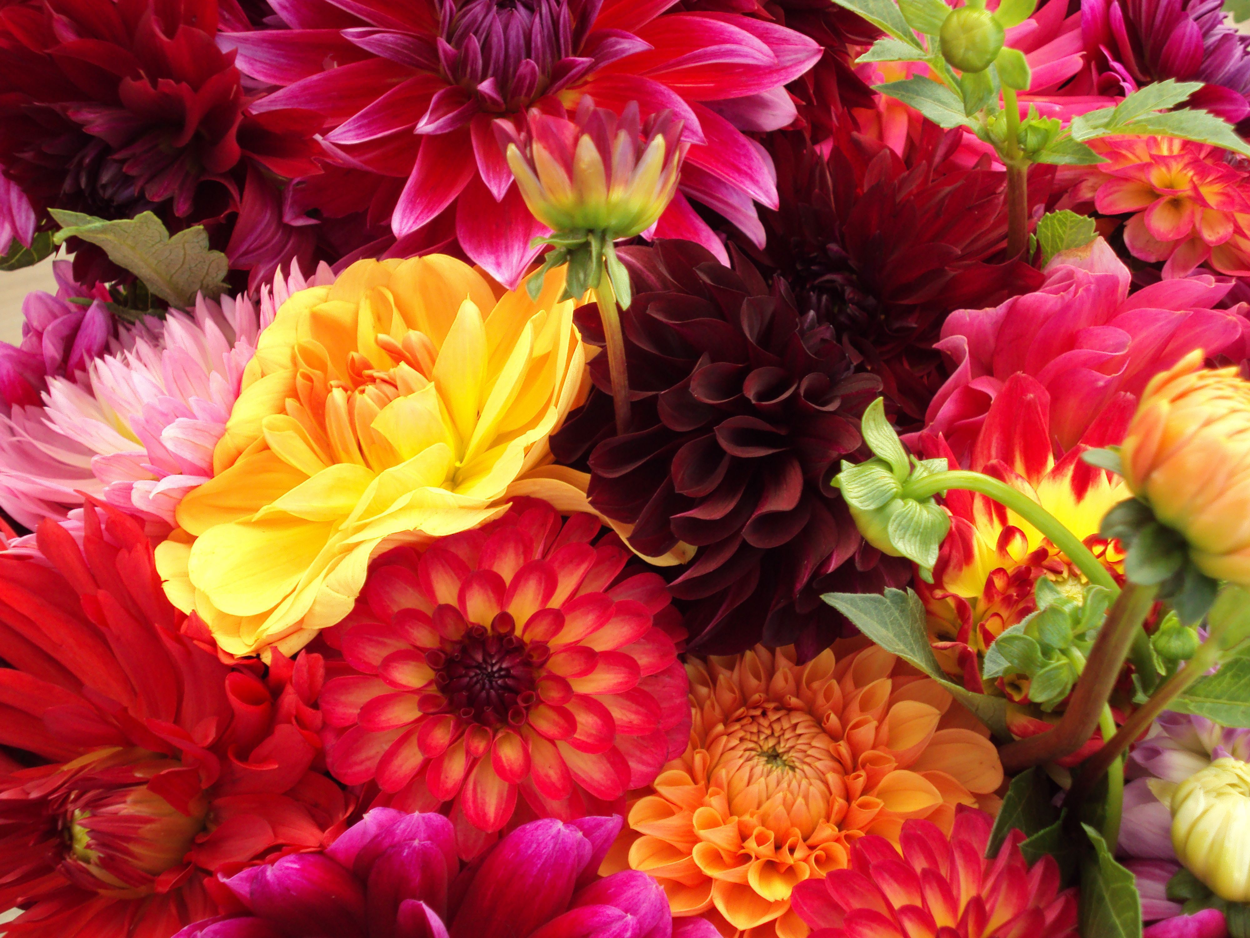 Bunch Of Flowers Photos