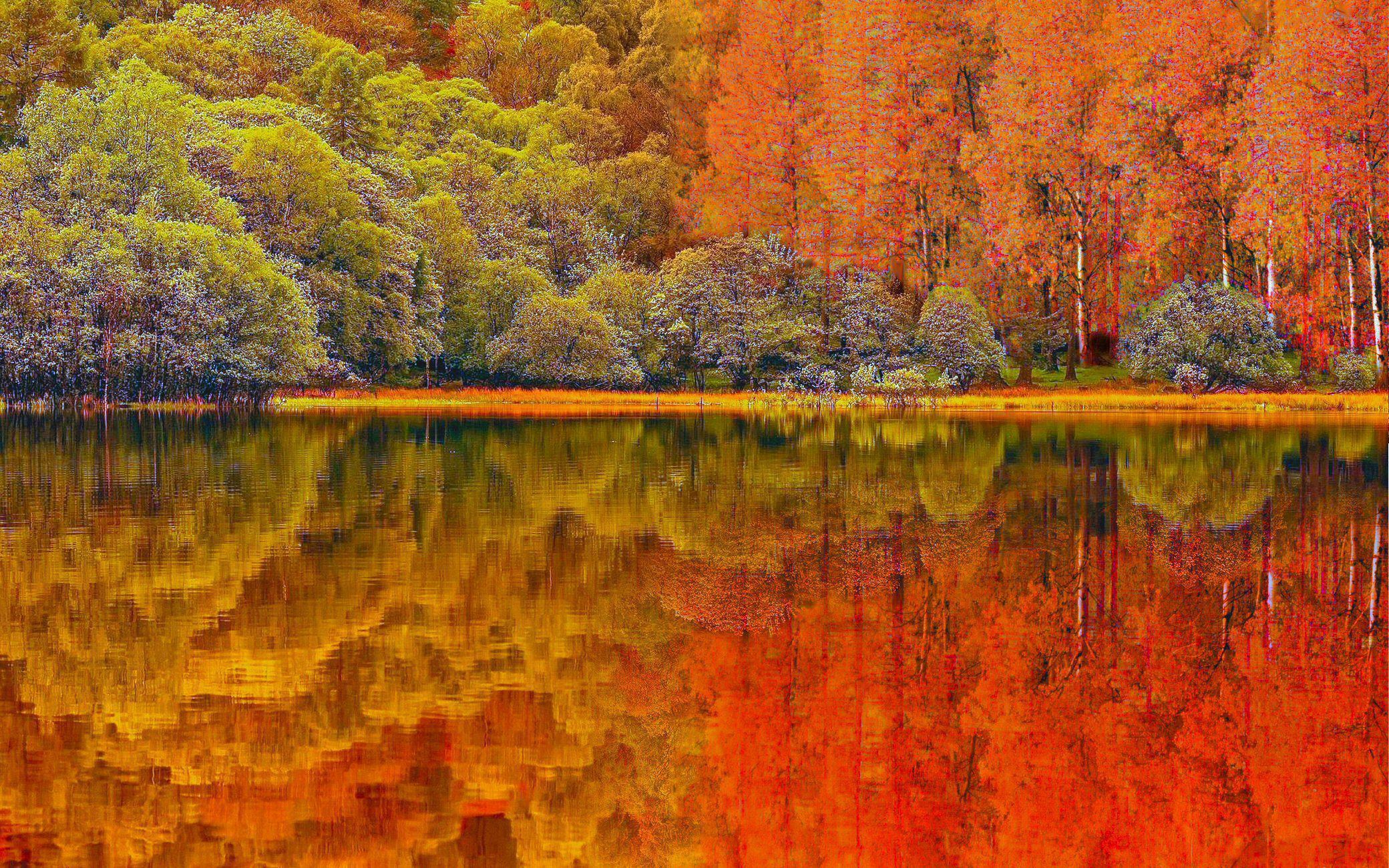 Picture Autumn Forest