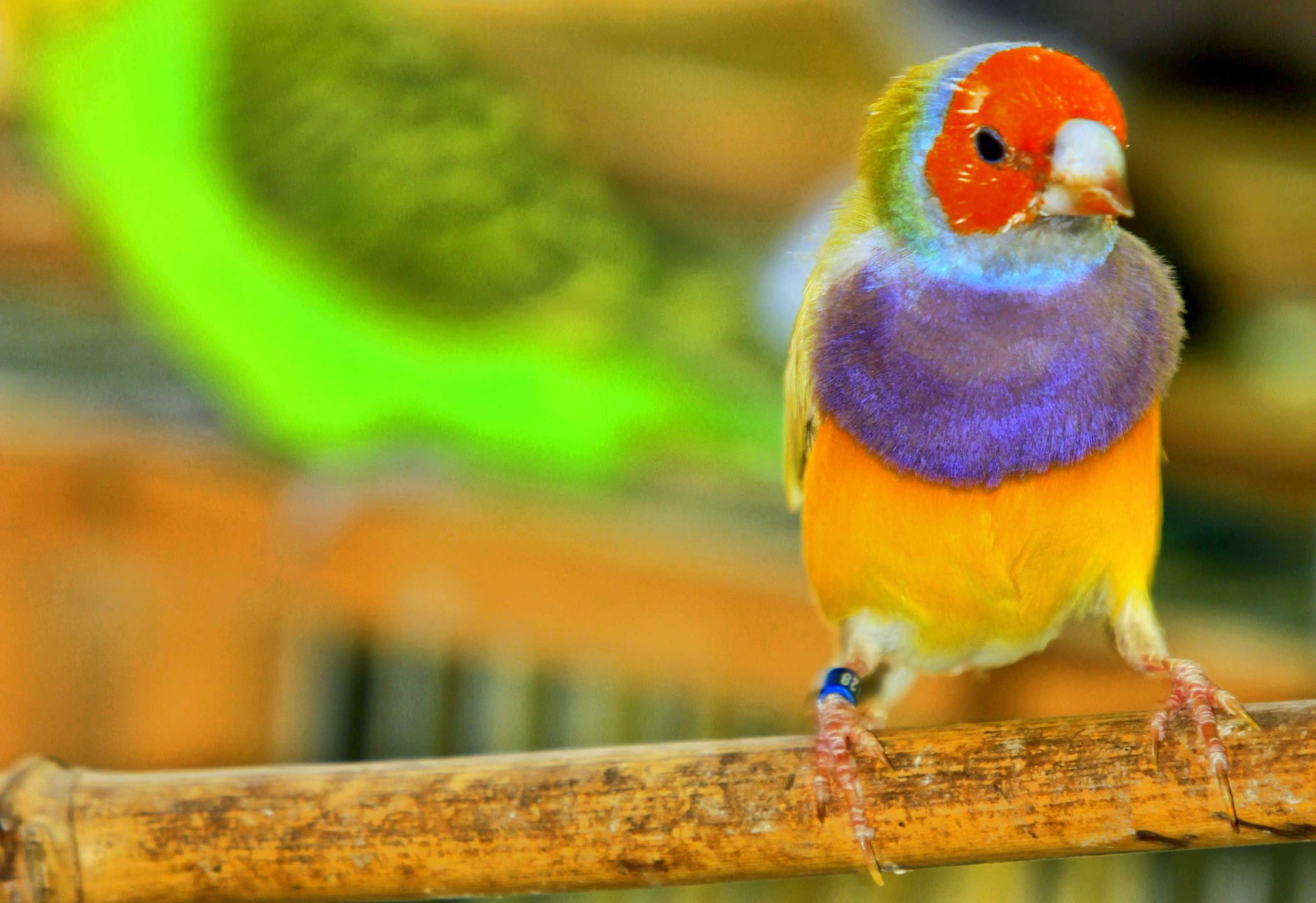Picture Aves Exoticas