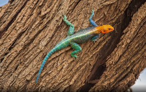 Agamas Wallpapers HD