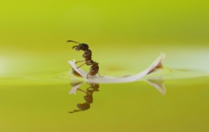 Ant Beautiful Wallpaper