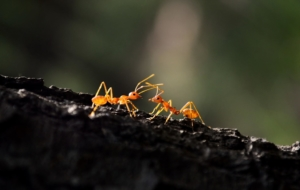 Ant Images