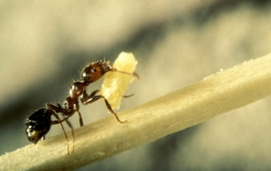 Ant Photos