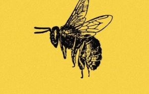 Bee Full HD Wallpapers