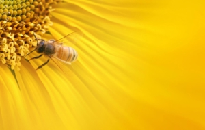 Bee Wallpapers HD