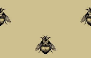 Bee Wallpapers HQ